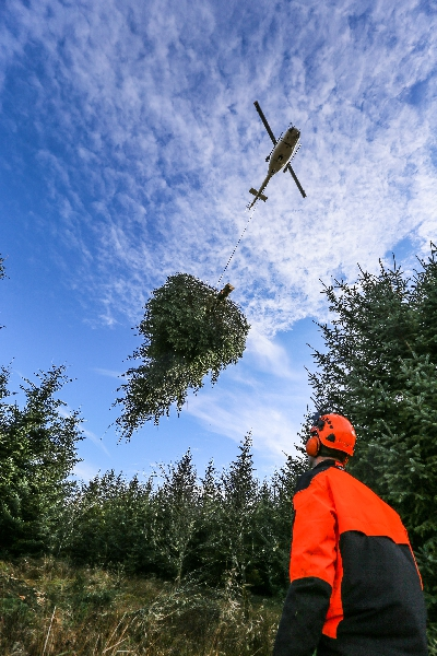 Helinorth Aerial load lifting service Christmas Trees